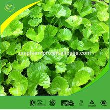 Manufacturer offer Natural Gotu Kola herb extract powder