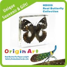 Acrylic blocks crafts Real Butterfly Specimen