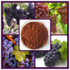grape seed extract 95 proanthocyanidins/grape seed p.e powder/high quality grape seed extracts