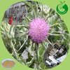 GMP factory steadily supply natural product for Red clover extract powder