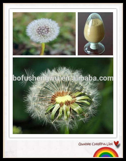 สารสกัดจากดอกแดนดิไล101,dandelionสารสกัดจากพืช