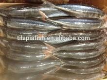 Horse mackerel frozen mackerel fish 20 cm +
