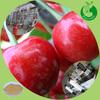 Hot sale fruit juice powder Sour Cherry Juice Concentrate