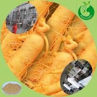 Wild Panax Ginseng Extract Powder Ginsenoside