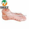 BIX-Y1023 modèle du massage des pieds 17CM