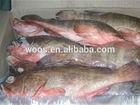 frozen fresh grouper fish for sale