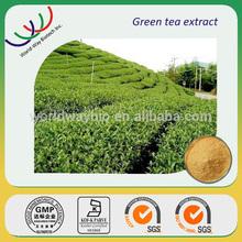 free sample HACCP KOSHER FDA manufacturer extract tea polyphenol,catechin,EGCG china herb tea