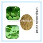 Ginkgo Biloba Extract Flavones 24% Lactones 6%