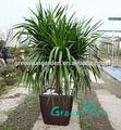 articoli per la casa di plastica unico vasi per piante di orchidee