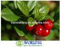 مستخلصات فاكهة التوت البري الطبيعي/ العضوية استخراج التوت البري/ المجففة التوت البري التوت البري استخراج مسحوق