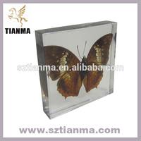 Tranparent Art Craft Acrylic Animal Specimens Factory