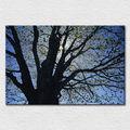 Atacado impresso lona moderna fotos sobre tela de algodão, bela arte do grande velha árvore de pintura a óleo enquadrado frete grátis