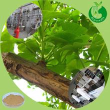 100% Ginkgo Biloba Powder/Ginkgo Biloba Extract/Ginkgo Leaf Extract