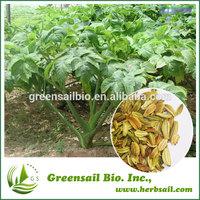 Natural Ashitaba seed for planting