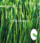 diamond artificial grass,olive artificial grass,artificial grass for football,