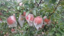 zip lock fruit bags
