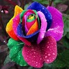 2015 Newest Hot Sale Rainbow Rose Seeds For Planting