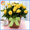 Fine christmas mini ceramic flower pots and planters for garden violet decor
