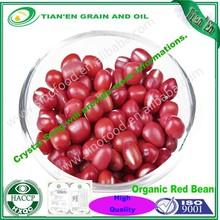 Orgánica frijoles rojos pequeños