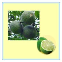Citrus Aurantium P.E. Synephrine
