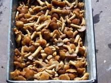 IQF frozen shiitake mushroom and more like nameko oyster etc. 2015 new price