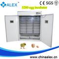 profissional 5000 ovo incubadora de negócios industriais incubadora de ovos para incubação