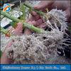 2-4 mm agriculture used premium perlite
