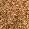 hot new harvest herbal medicine Chinese Fresh Burdock