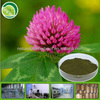 hot sale and free sample 100% natural plant extract four leaf clover seeds extract