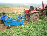 best-selling single-row potato harvester machine 4UD series