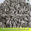 nova safra de sementes de girassol para venda