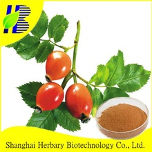 Manufacturer Supply Rosehip Polyphenol