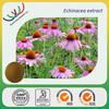 Native American traditonal herb cold medince cheap price high quaity echinacea purpurea extract polyphenol