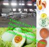 egg cleaning machine/egg processing machine/egg machine
