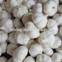 2014 crop fresh natural garlic wholesale garlic with best garlic price