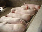 Premix pig feed pig feed Hot sale in 2014