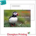 aves e vida selvagem design 2014 atacado 3d postal com alta qualidade