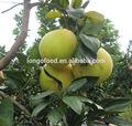chegada nova cítricas frescas pomelo fruta