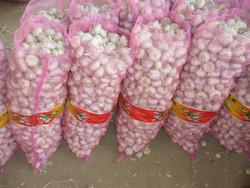 Fresh garlic/Fresh normal white garlic/Pure white garlic