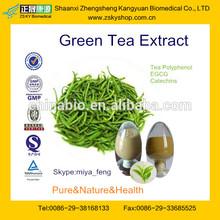 GMP Manufacture Supply Natural Tea Polyphenol 10%-98%