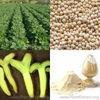 Factory supply 100% Natural non gmo soybean/Soy Isoflavones Extract Powder 10:1/ soy isoflavone 40% &80% /Soy Isoflavones