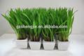 Jardinagem bonsai artificial decorativa flor falso trigo mudas, mini plantas artificiais