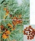 plant extract herbal extract botanical extract