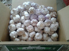 new crop garlic products AJO AGLIO AIL