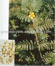 Tribulus Terrestris extract 98% saponins (furostanol glycosides)