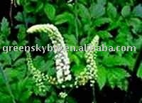 Black Cohosh Extract 2.5% & 8% Triterpenoid Saponins