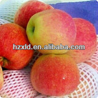 gold supplier export fuji apple on sale in 2013