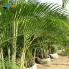 017 Ornamental foliage plants