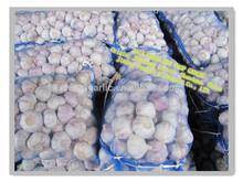 Fresh normal white garlic (10kg mesh bag)