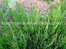 horsetail P.E/Equisetum arvense L/CAS NO.: 1343-98-2